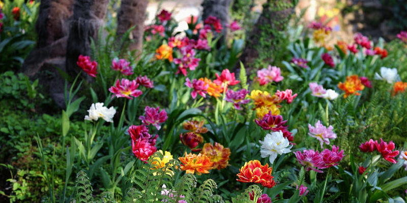 How to: Wintering a Lantana Indoors