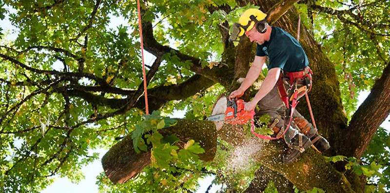 Tips to Get the Best Tree Service