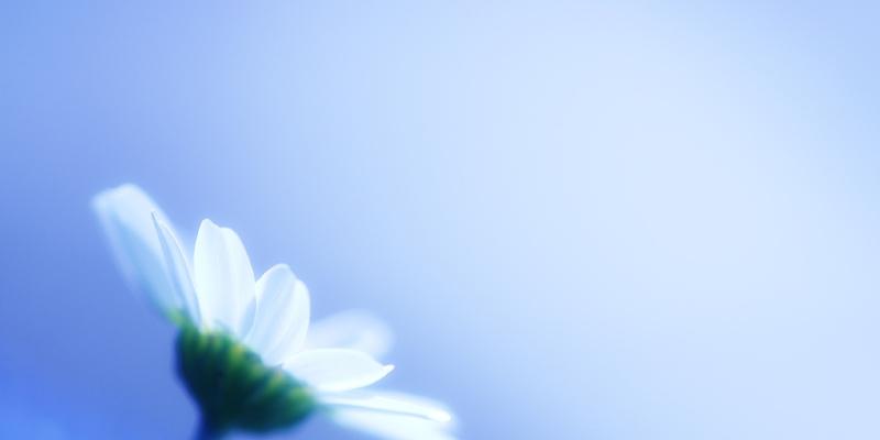 Brighten Any Garden With White Crape Myrtle